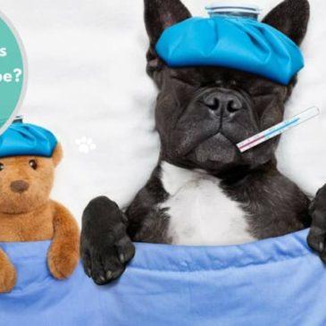 Cuide de seu Pet – Fique de olho nas#Vacinas